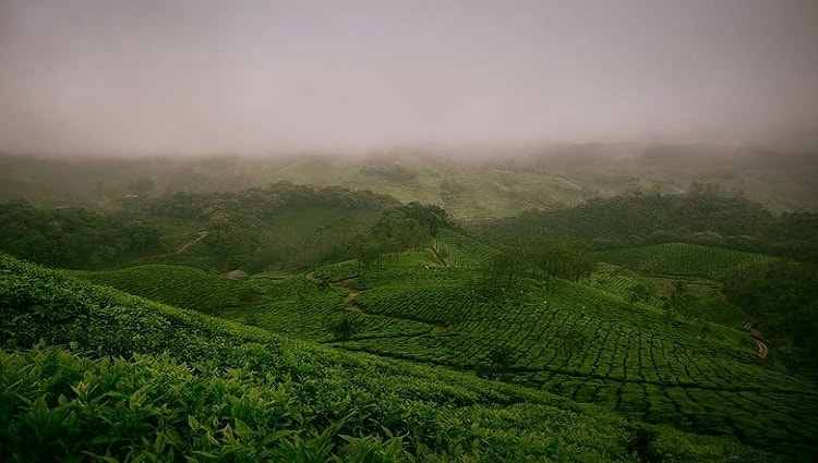 Bukit PJR Pringsewu